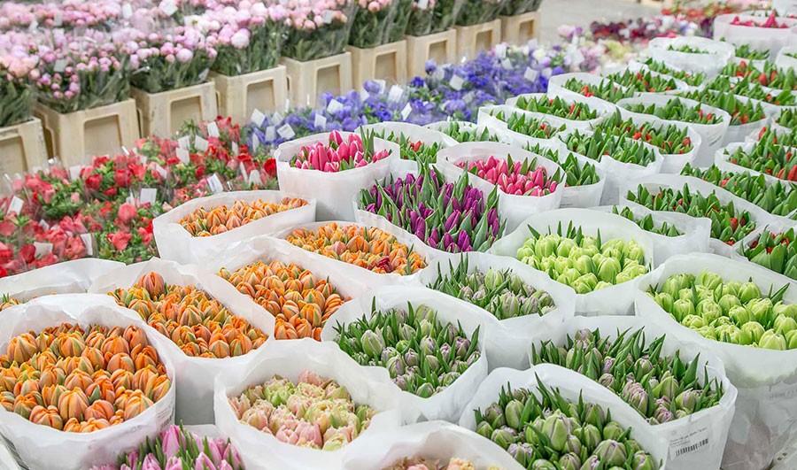 цветы и поставщики