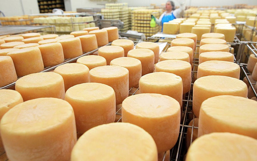 фотография сыра