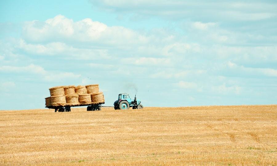 сельхоз бизнес один из способов заработать